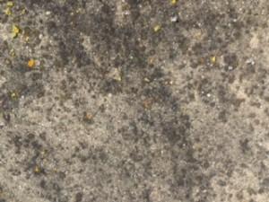 Nettoyer les dalles terrasse noircies